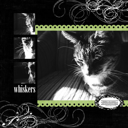 Whiskers2